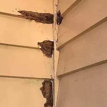 Exterior-Repaint-In-SandringhamExterior-Repaint-In-Sandringham2